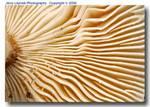 01_K_092_D50_105Mic_Iso200_21Jul06_Mushroom_Pinch_ugc505.jpg
