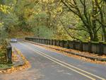 236407Autumn_Bridge_6_copy.jpg