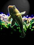 237079zenfish2.jpg