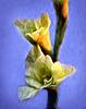 gladiolus-OP-8x10-96.jpg