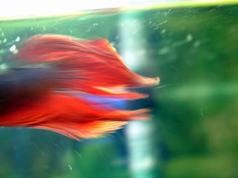 My fish 2