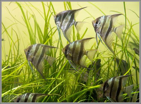 Fishies - Steinhart Aquarium