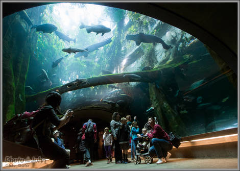 Underwater Tunnel - California Academy of Sciences