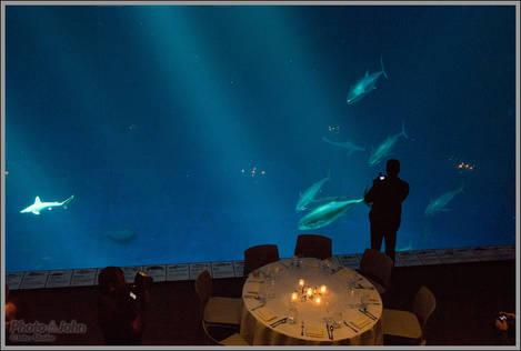 Monterey Aquarium Deep Ocean Aquarium