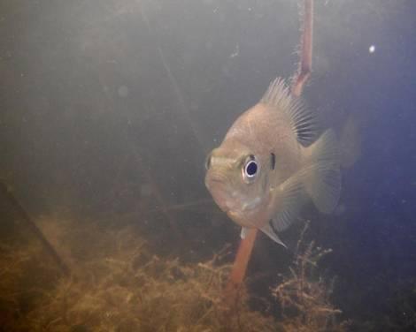 One Fishy