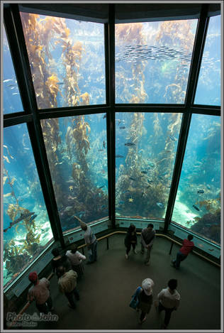 Kelp Forest - Monterey Bay Aquarium