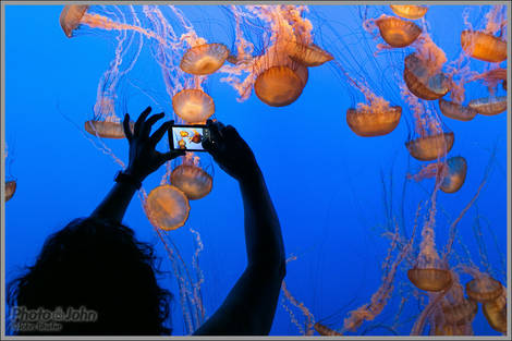 Jelly Photographer - Monterey Bay Aquarium