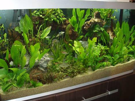 plant tank