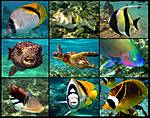 9-fish-.jpg
