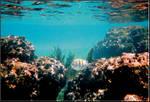 reef_fish1.jpg