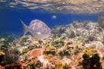 reef_fish2.jpg