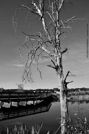 Along the Intercoastal Waterway