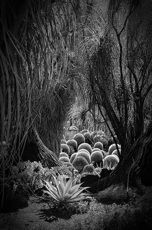 Desert Garden in Black & White