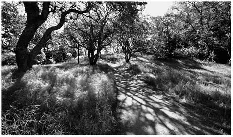 Wunderlight Trail