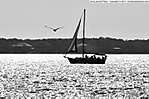 2_U_200_D90_VR55-300_I-125_20Mar14_Panama-City_St-Andrews-pier_Sailboat_BW_svc699.jpg
