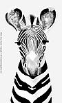 3_A_218_D7000_VR18-ii_I-500_2Mar13_Trip_Venice_Art-fair_Zebra_BW_sgc699.jpg
