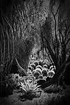 Desert_Garden-B_W.jpg