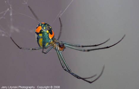 One spider