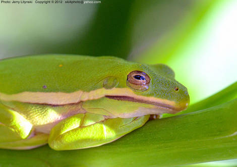 A tree frog  -2