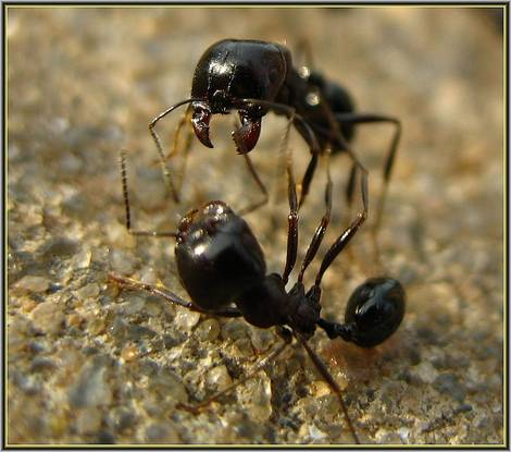 ant-aggression