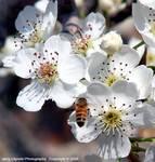 23488004_A_288-c_D50_55-200_T95_Iso400_6Mar06_Blossoms_ugc500.JPG
