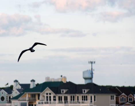 OC Sea Gull