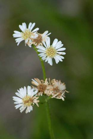 Wildflowers revisited II