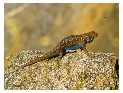 lizard about to eat lunch