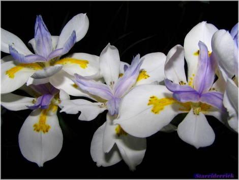Flowers for Dana