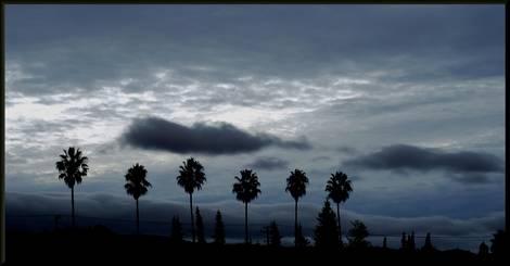 Night Fog & 6 palms