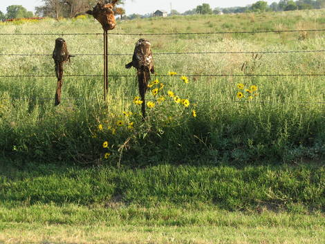 The Awful Truth About Sunflowers