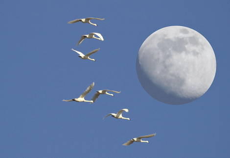 """""""Fly me to the Moon"""""""
