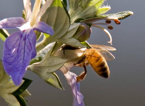 Transparent Bee