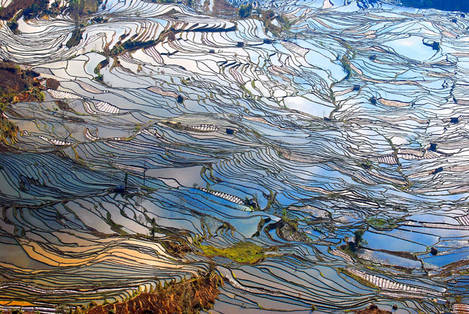 Rice terrace with sky reflection