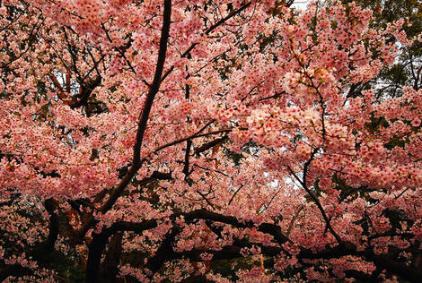 Spring Colour 3
