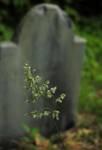 163527flower_tomb.JPG