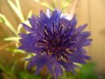 238896wild_flower_.jpg