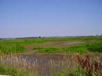 240001Horicon_Marsh_July_9_2005_V102-resize.jpg