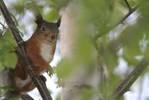 245418squirrel2.jpg
