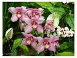 247393pink_flowers.jpg
