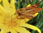 Butterfly_Moth_A1CSC_0013.jpg