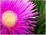 Fancy_flowerCSC_3063.jpg
