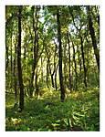 In_Living_Color_Fuji_Redwoods.jpg