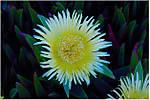 Late_bloomerDSC_3833.jpg
