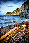 Point_Lobos_State_1.jpg