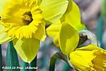 SpringSprung10-2.jpg