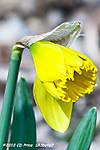 SpringSprung10-3.jpg