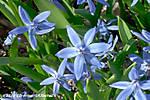 SpringSprung10-4.jpg