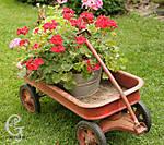 Spring_Color_2010-49.jpg