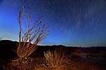 Stars_Trail_Joshua_NP-1.jpg